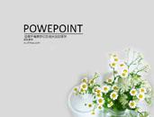 雛菊盆景PPT模板